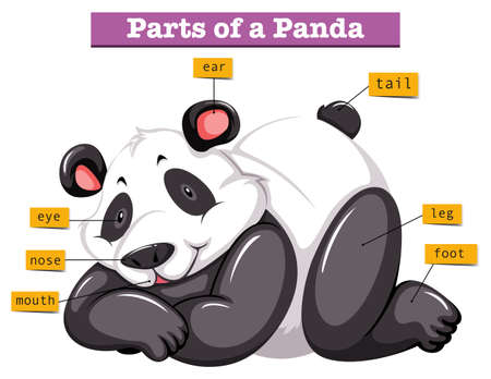 Panda and different parts of the body illustration