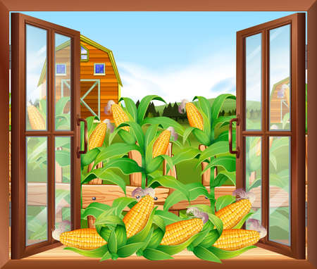 corn field: Corn field in the farm illustration
