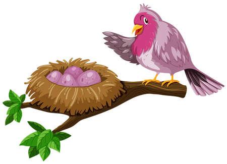 nesting: Bird and bird nest with eggs illustration Illustration