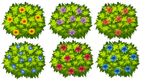 bush: Green bush with colorful flowers illustration