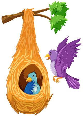 adentro y afuera: Pájaro dentro y fuera de la ilustración nido Vectores