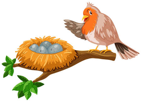 Bird and the eggs in the nest illustration