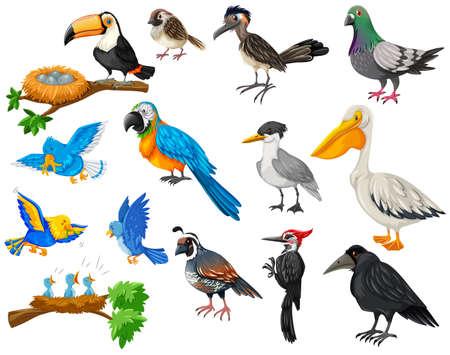 Different kinds of birds set illustration