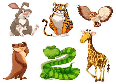 wildlife: Set of different wildlife illustration
