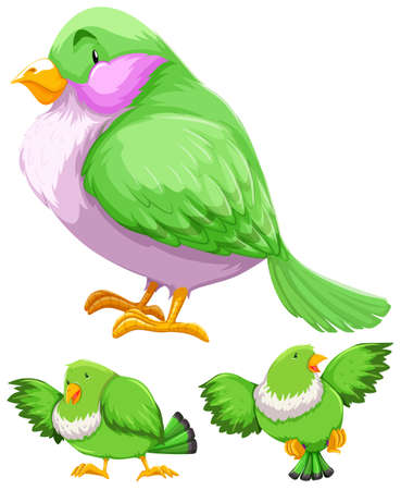 Green bird in three actions illustration