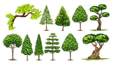 Different kinds of trees illustration Illustration