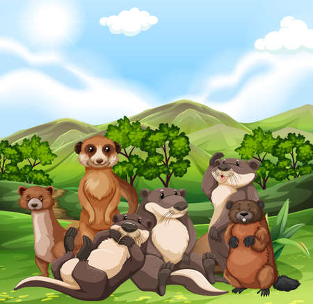 beavers: Otters and beavers in the field illustration Illustration
