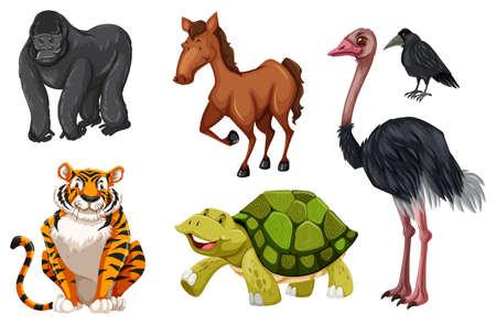 animales silvestres: Set of different wild animals illustration