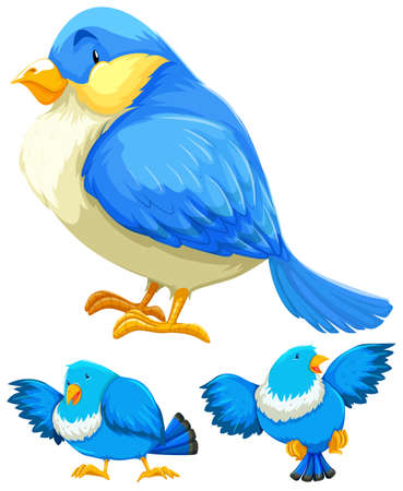Blue bird in three different actions illustration