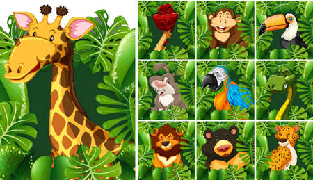 wildlife: Many wildlife behind the green bush illustration Illustration