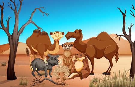 meerkat: Wild animals in the savanna field illustration