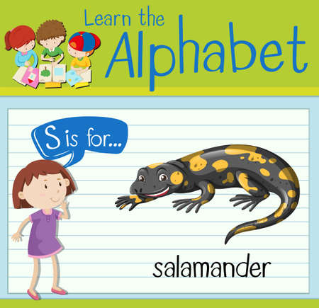 salamandre: Flashcard letter S is for salamander illustration