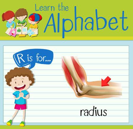 radius: Flashcard letter R is for radius illustration