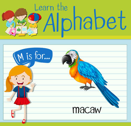 macaw: Flashcard letter M is for macaw illustration