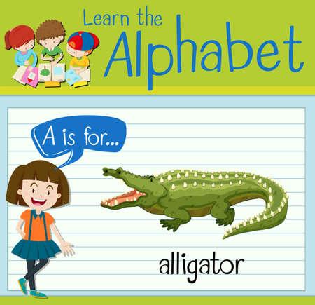 alligators: Flashcard letter A is for alligator illustration
