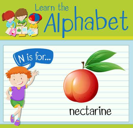 nectarine: Flashcard letter N is for nectarine illustration