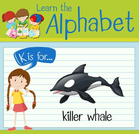 killer: Flashcard letter K is for killer whale illustration Illustration