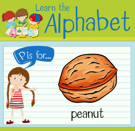 p illustration: Flashcard letter P is for peanut illustration Illustration