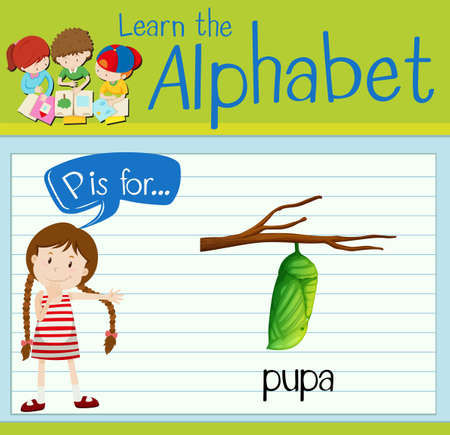 pupa: Flashcard letter P is for pupa illustration
