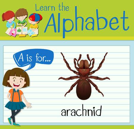 arachnid: Flashcard letter A is for arachnid illustration Illustration