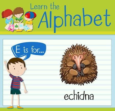 Flashcard letter E is for echidna illustration Illustration