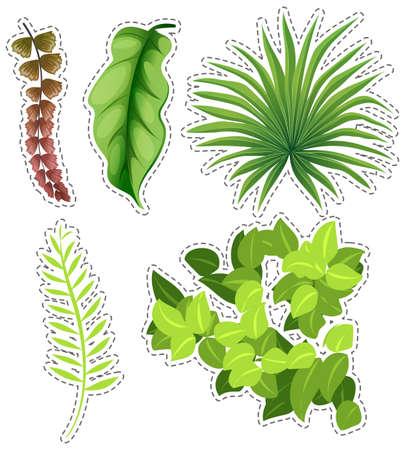 Sticker set of green leaves illustration