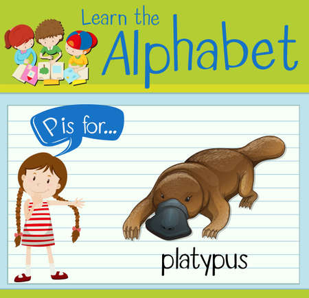 p illustration: Flashcard letter P is for platypus illustration Illustration