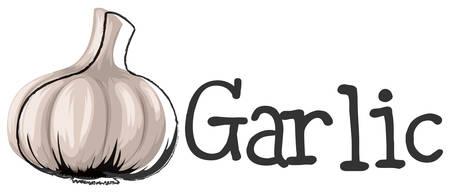 illustration: Label design with fresh garlic illustration Illustration