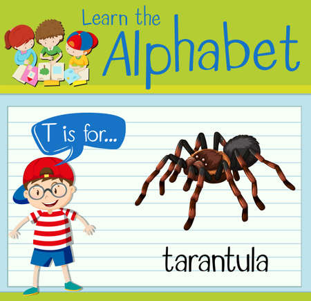 tarantula: Flashcard letter T is for tarantula illustration