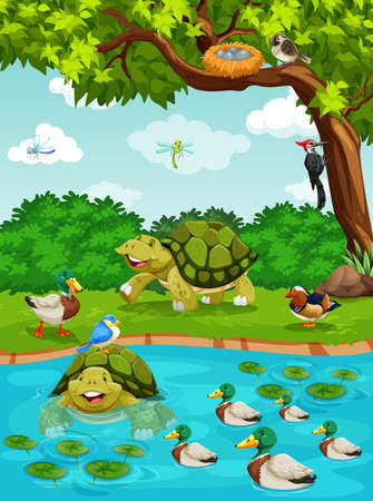 garden pond: Turtles and ducks at the river illustration Illustration