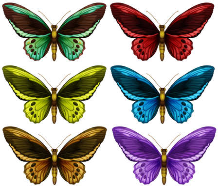 multiple: Monarch butterflies in six different color wings illustration