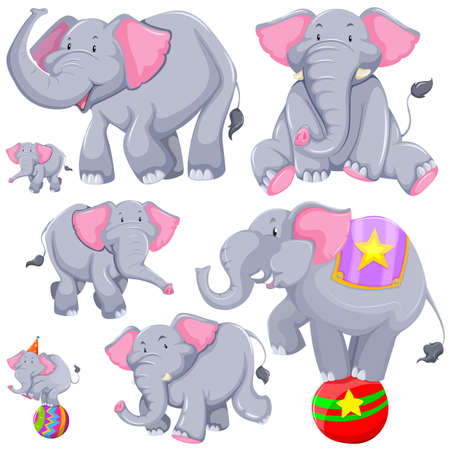 circus animal: Gray elephant in different actions illustration