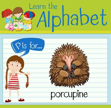 p illustration: Flashcard letter P is for porcupine illustration