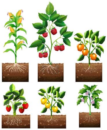 raices de plantas: Diferentes tipos de plantas en la ilustración jardín Vectores