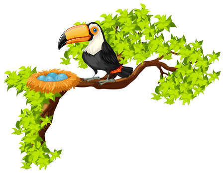 Toucan and nest on the tree illustration