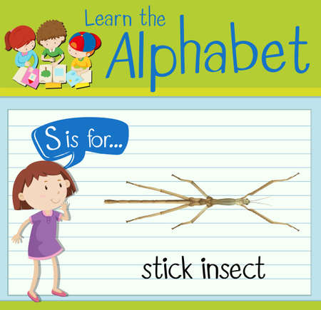 stick insect: Flashcard letter S is for stick insect illustration