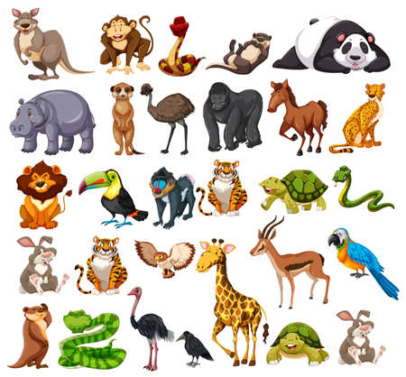 Different types of wild animals on white  illustration
