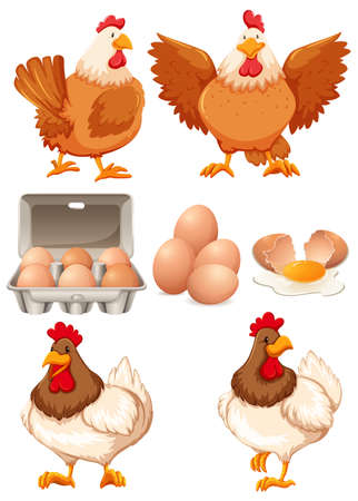 Chickens and fresh eggs illustration