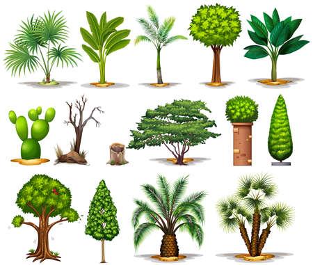 multiple: Different types of trees illustration Illustration