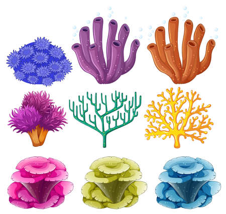 reef: Different types of coral reef illustration