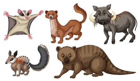 different types: Different types of wild animals illustration
