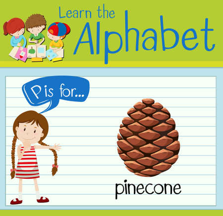 p illustration: Flashcard letter P is for pinecone illustration