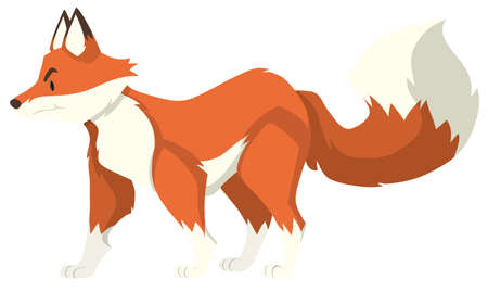 ful: Red wolf standing alone illustration Illustration