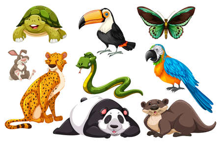 Different kinds of wild animals illustration