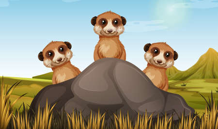 Meerkats Stock Illustrations, Cliparts And Royalty Free Meerkats Vectors