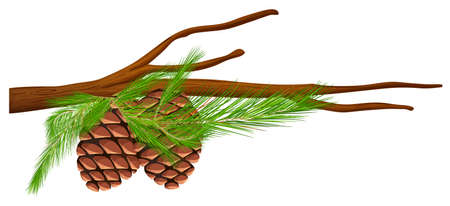 fern leaf: Pinecones on the branch illustration Illustration