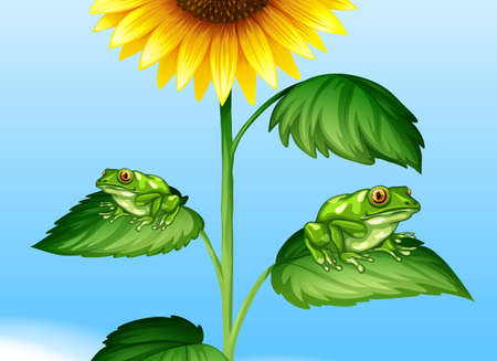 sunflower drawing: Two green frogs on sunflower tree illustration