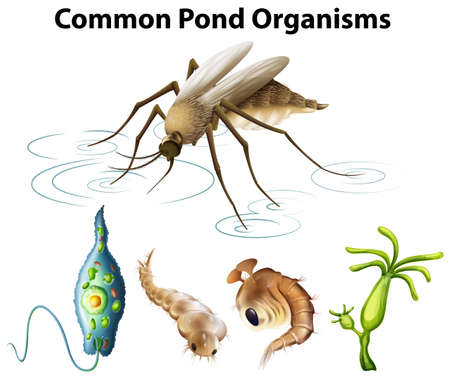 Common pond organisms diagram illustration