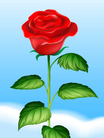 red rose: Red rose and sky background illustration Illustration