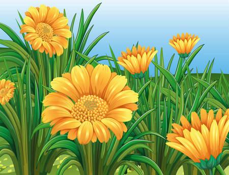 Champ de fleurs jaunes dans l'illustration printemps